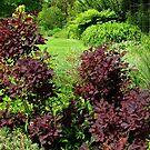 Sträucher mit kupfernen farbigen Blättern - Hyde Hall, Essex von BlueMoonRose