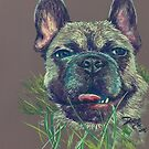 Baxter by DaCre8iveOne