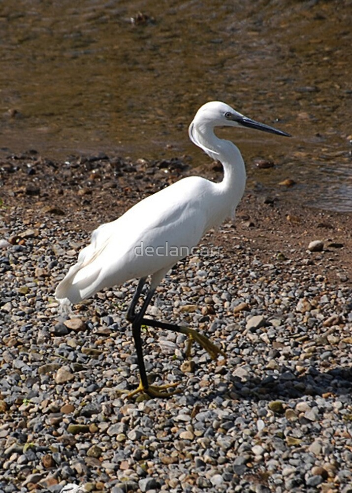 Little Egret by Declan Carr
