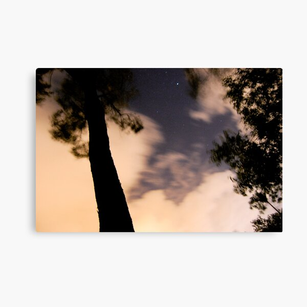 windy tree 2 Canvas Print