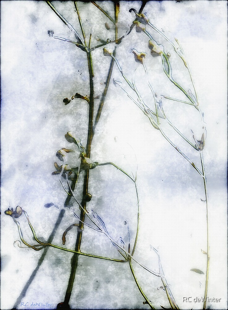 Snowstalks by RC deWinter