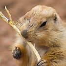 Snack on a Stick by Sue  Cullumber