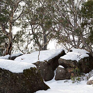 Snow Gums by kllebou