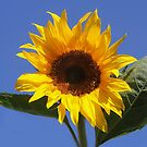 Good Morning Sunshine! by Heather Friedman