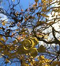 Corkscrew Tree Spiral Leaves Clouds Cara Schingeck by Cara Schingeck