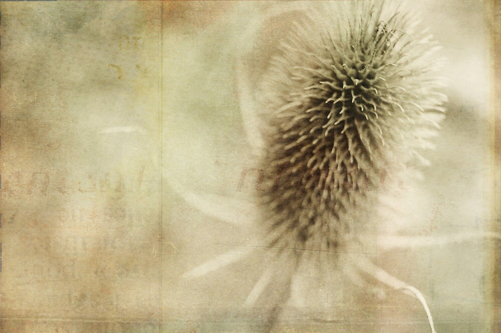 thistle by hilde wegner