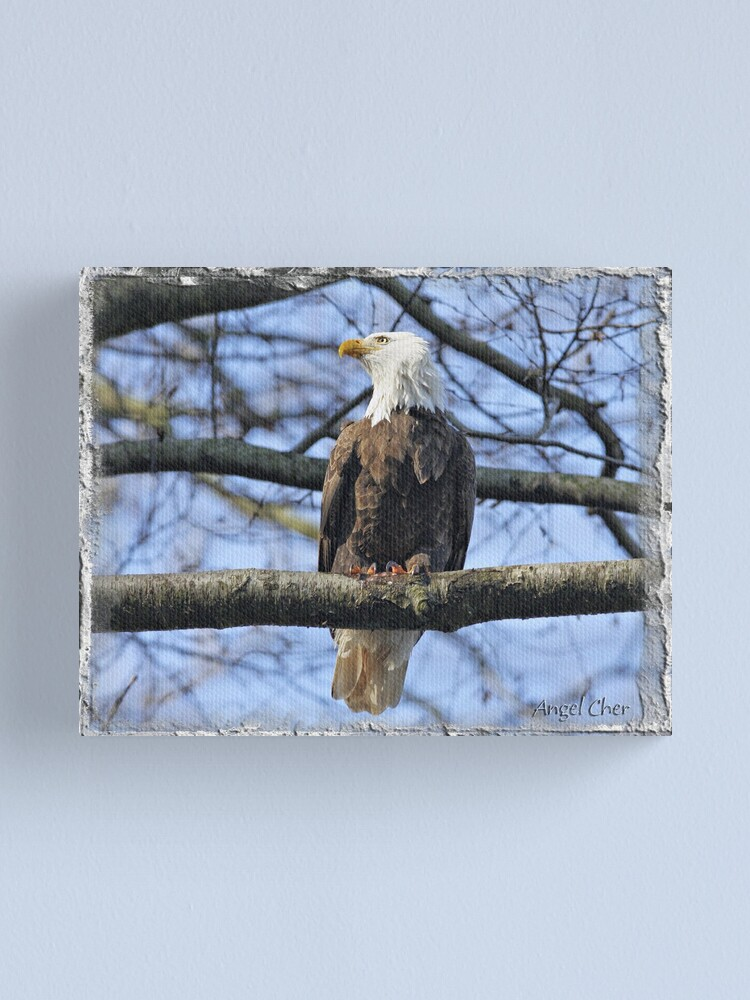 Alternate view of Pretty Eagle Canvas Print