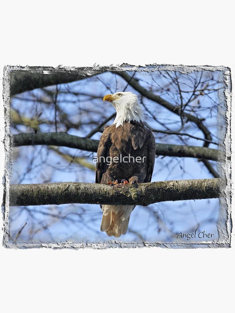 Pretty Eagle by angelcher