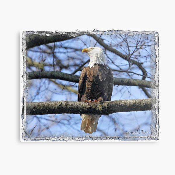 Pretty Eagle Metal Print