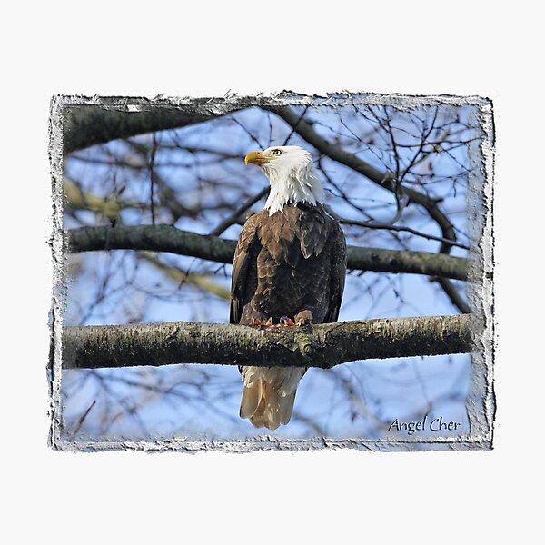 Pretty Eagle Photographic Print