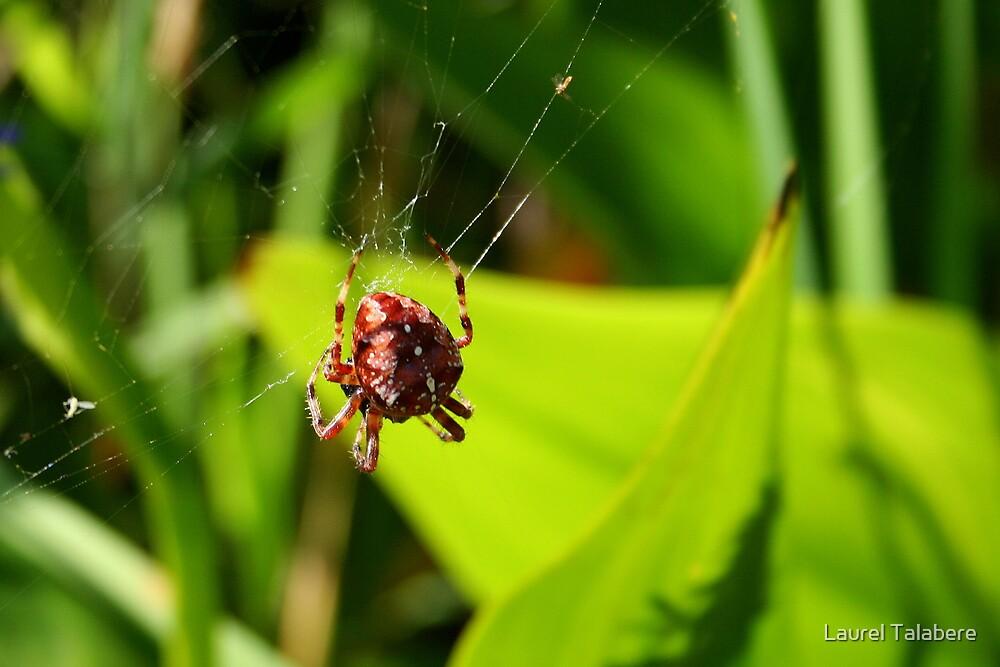 Garden Spider by Laurel Talabere