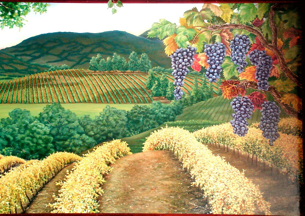Sonoma Valley by Christopher  Salmon