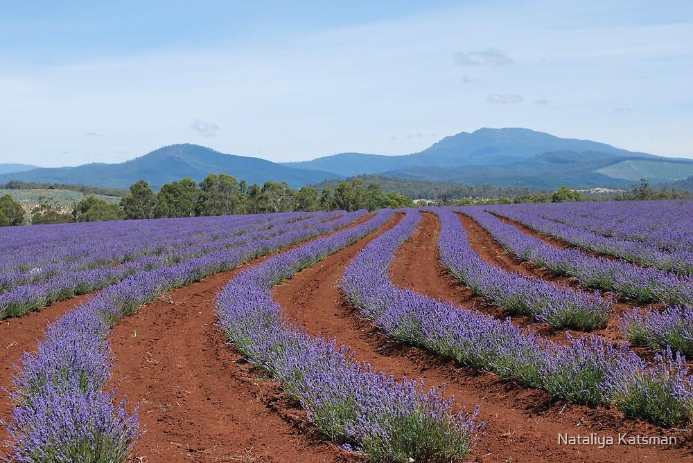 Bridestowe Lavender Farm by Nataliya Katsman