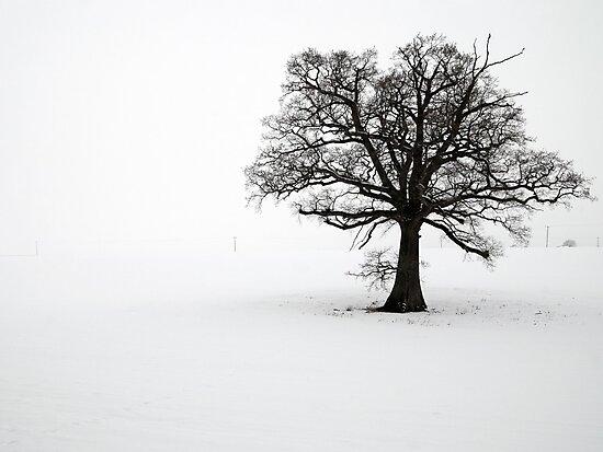 Lone Tree in the Snow by Greg Webb