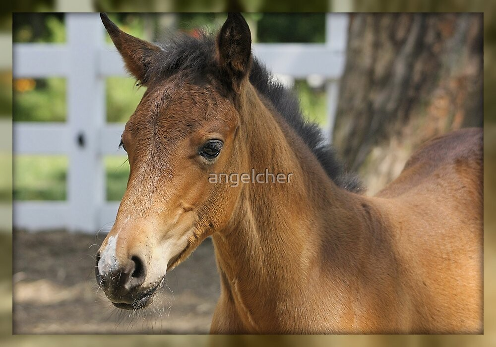 Just A Filly by angelcher