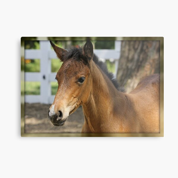 Just A Filly Metal Print