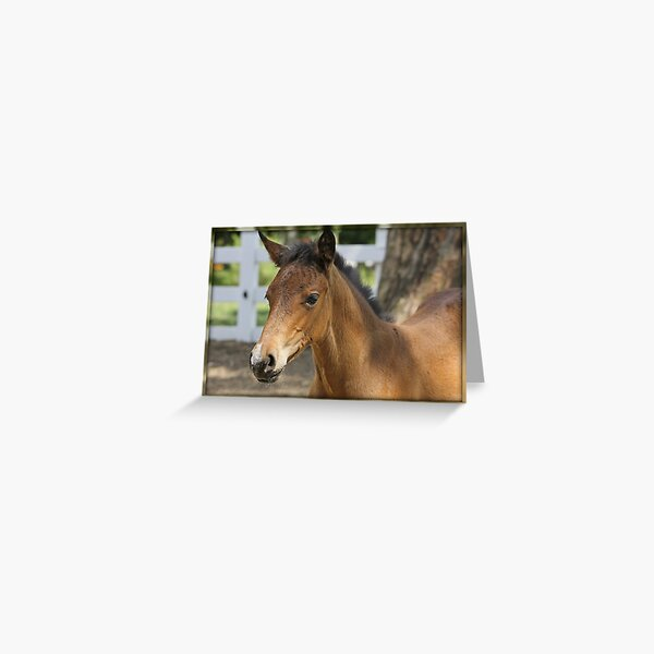 Just A Filly Greeting Card
