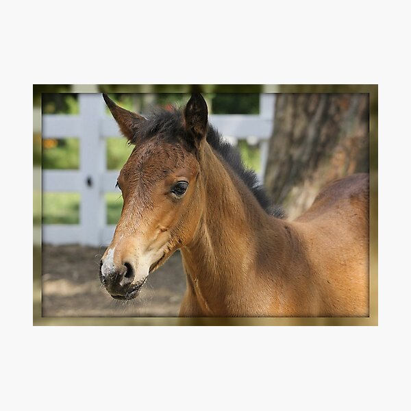 Just A Filly Photographic Print