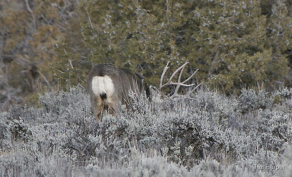 Mule Deer Eating....... by Tim Harper