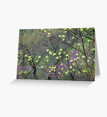 Sassasfras Blossoms Greeting Card