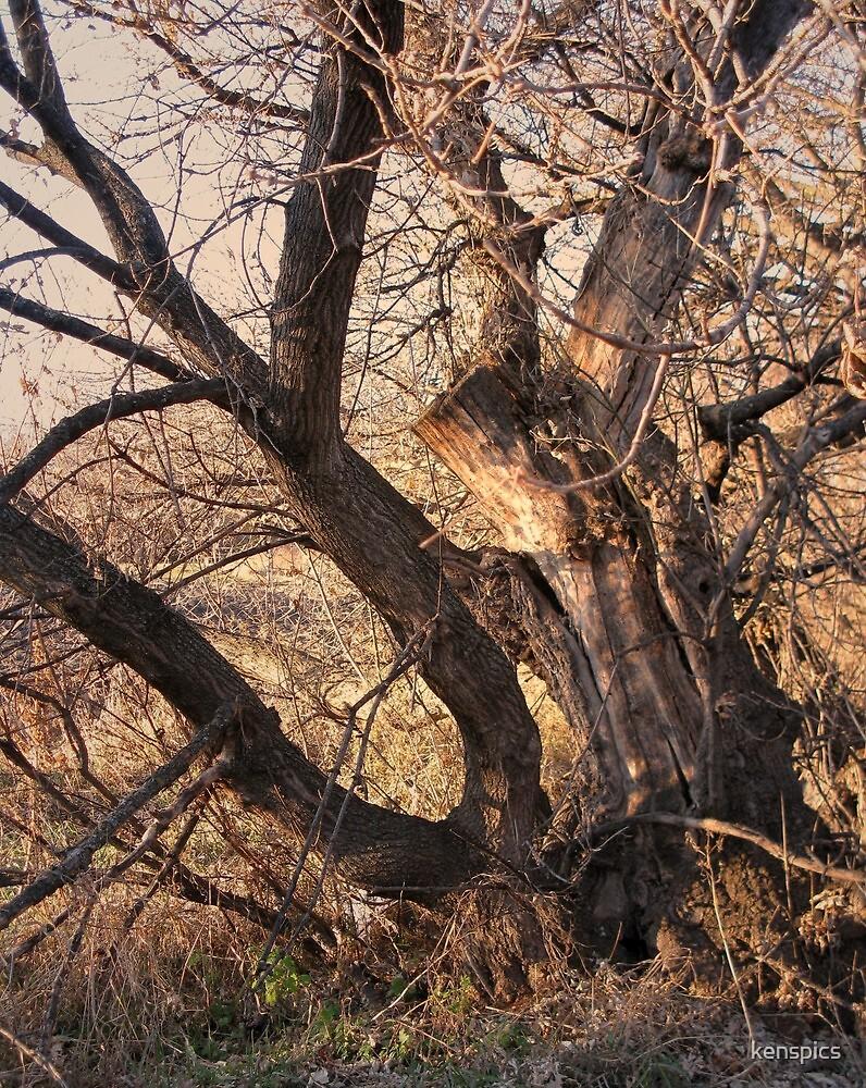 Twilight Tree by kenspics