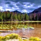 Bear Lake - Rocky Mountain National Park by Kathy Weaver