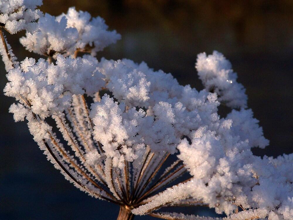 Frosty! by karendawson