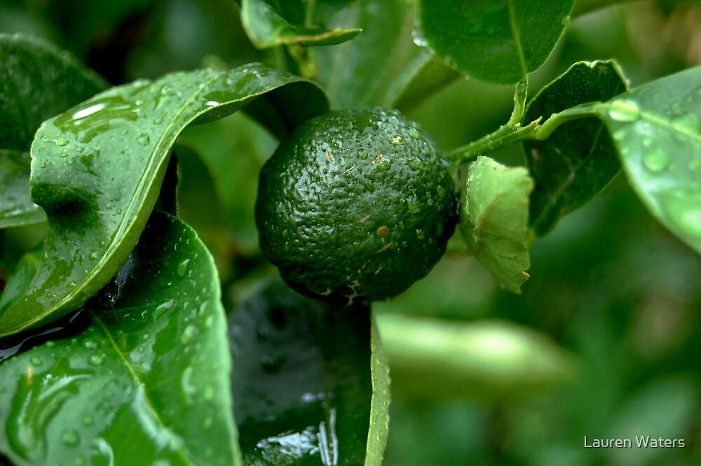 Green Mandarin by Lauren Waters