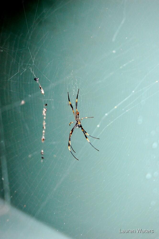 Spider Web by Lauren Waters