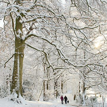 Winter Woodland Scene by AlysonFennell