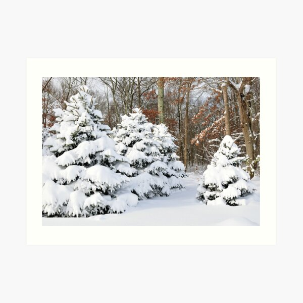 Snowy Pines Art Print