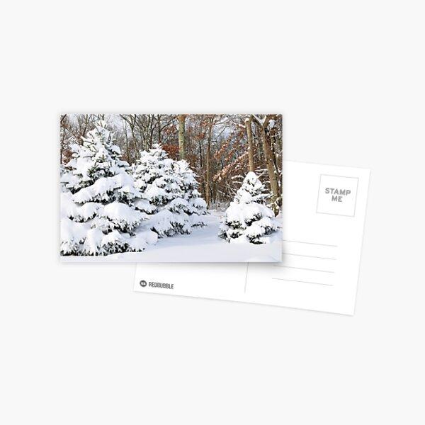 Snowy Pines Postcard
