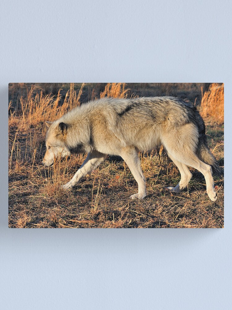Alternate view of Ahote the Wolf Hybrid Canvas Print