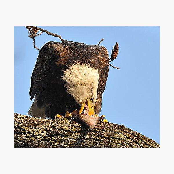 "Eagle: ""I LOVE Fish!"" Photographic Print"