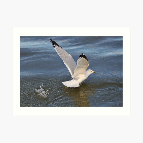 Gull on the river Art Print