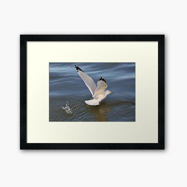 Gull on the river Framed Art Print