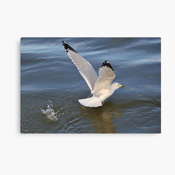 Gull on the river Canvas Print