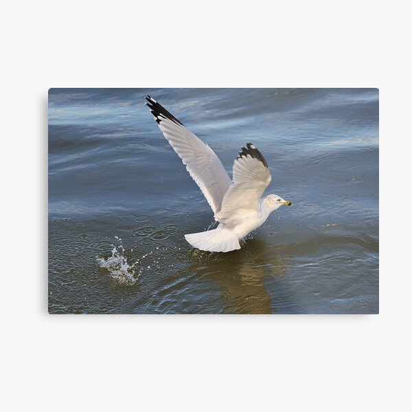 Gull on the river Metal Print