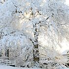 Snowy Trees by Alyson Fennell