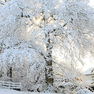 Snowy Trees by AlysonFennell
