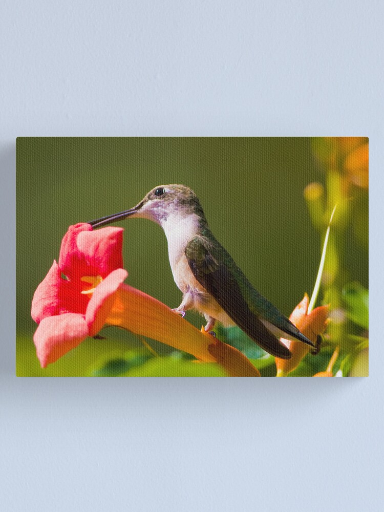 Alternate view of Hummer on a Trumpet Canvas Print