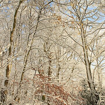 Winter Woodland by AlysonFennell