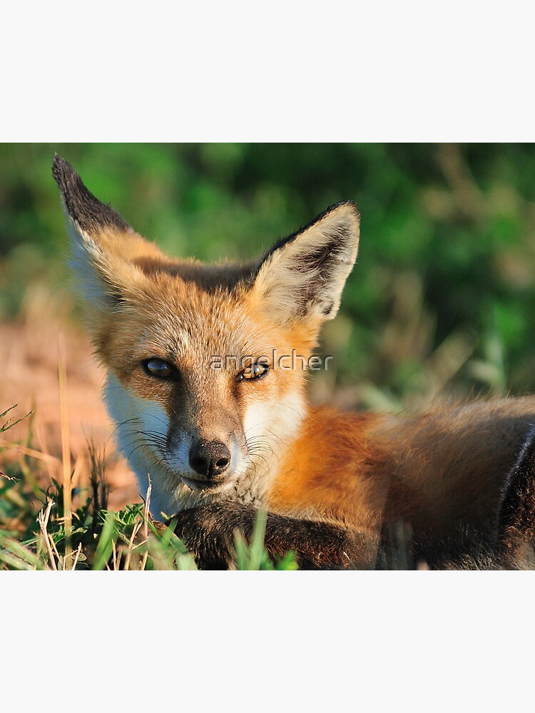 Red Fox Look by angelcher