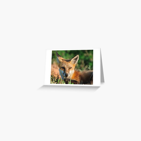 Red Fox Look Greeting Card