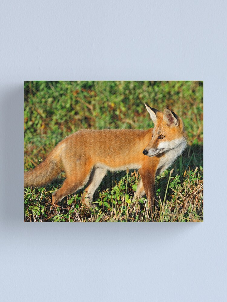 Alternate view of Red Beauty Canvas Print