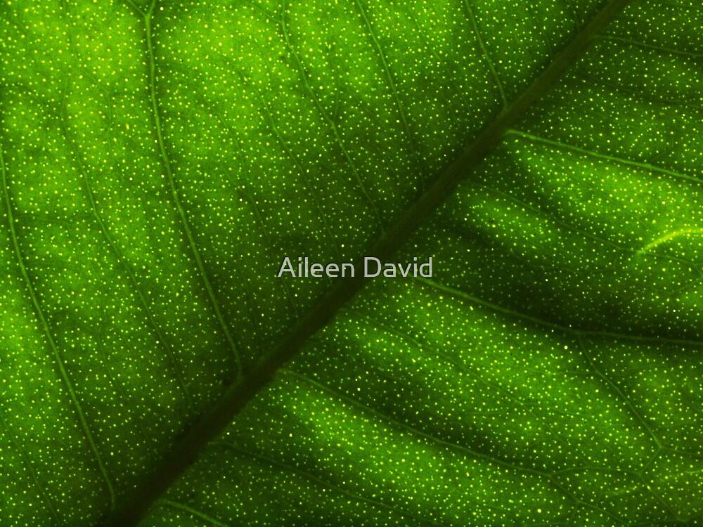 Leaves In Summer-Las Hojas En Verano by Aileen David