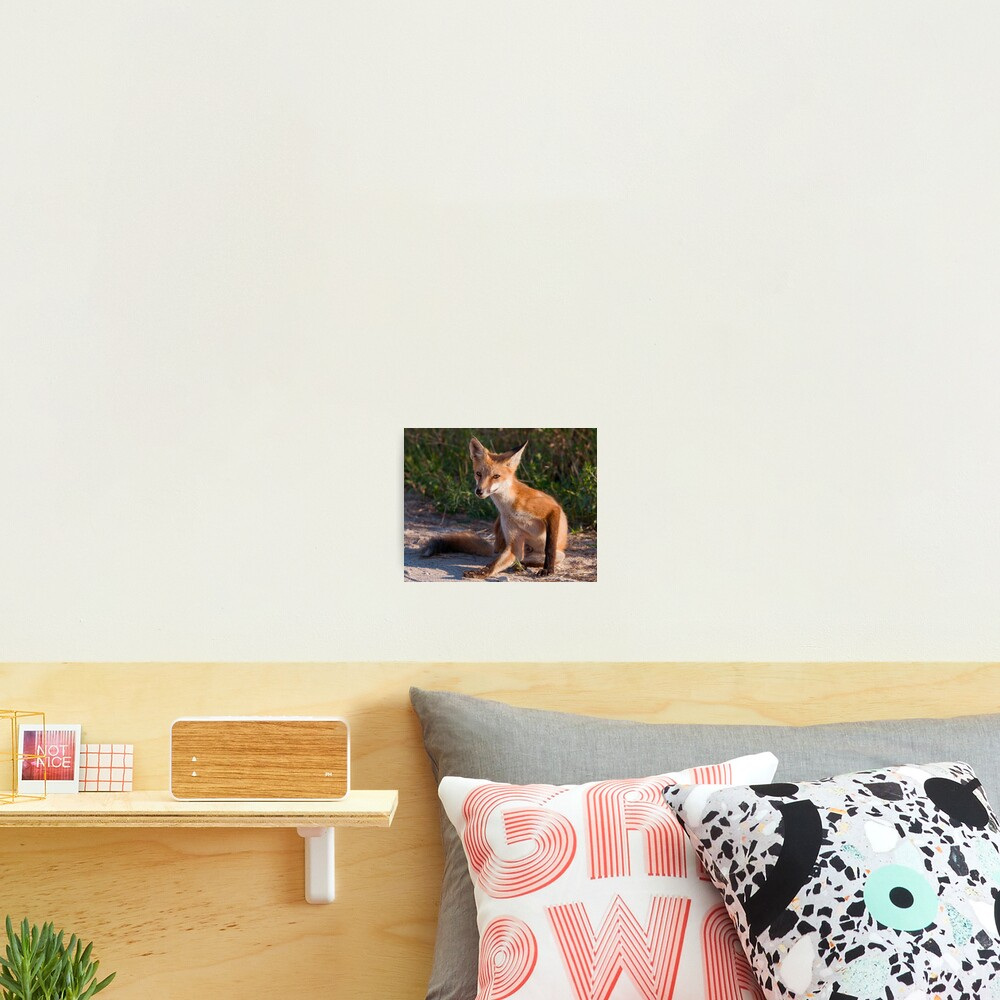 Red Fox In Summer Photographic Print