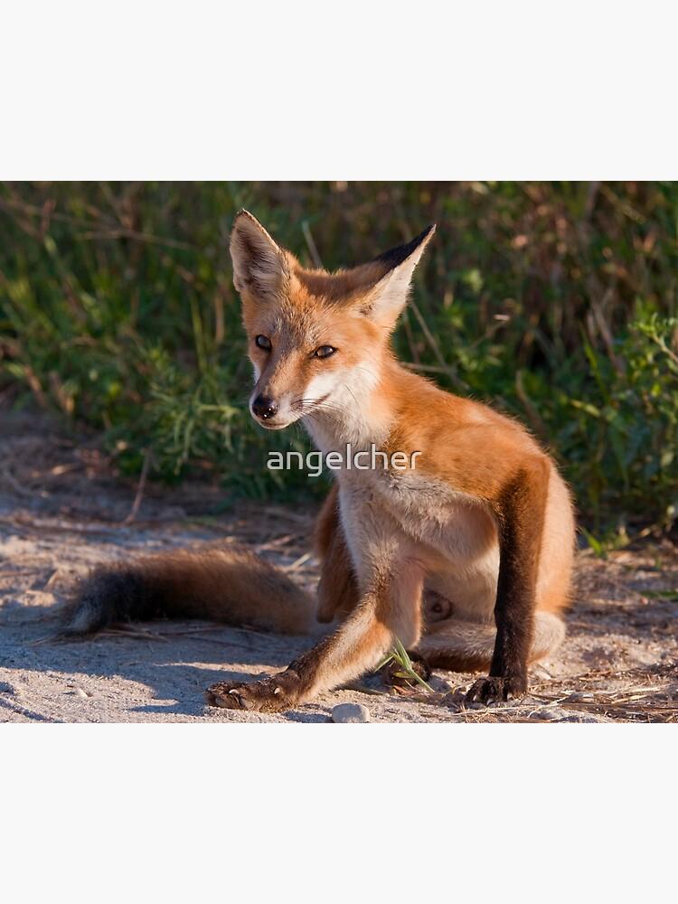 Red Fox In Summer by angelcher