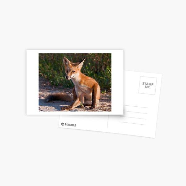 Red Fox In Summer Postcard