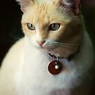 Jasper by Christina Backus